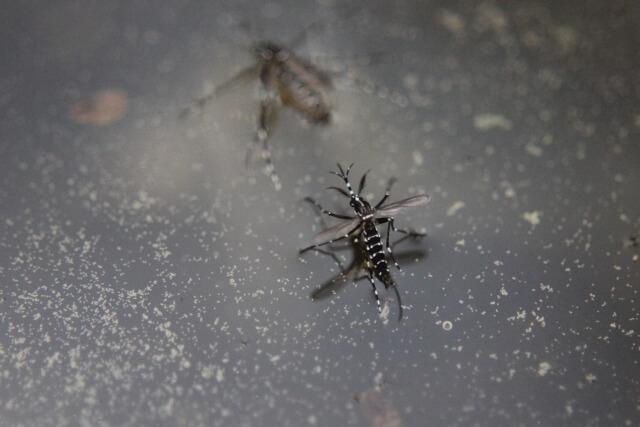 蚊 捕まえる